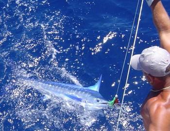 08/07 spearfish Cavalier & Blue Marlin Sport Fishing Gran Canaria