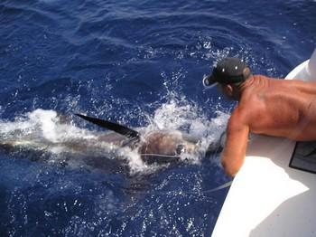 14/07 spearfish Cavalier & Blue Marlin Sport Fishing Gran Canaria