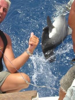 29/07 hammerhead shark Cavalier & Blue Marlin Sport Fishing Gran Canaria