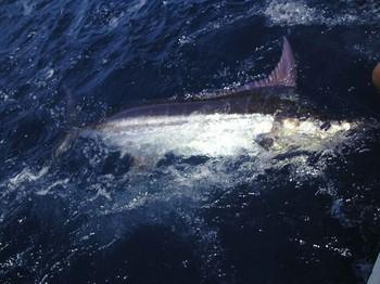 16/09 blue marlin Cavalier & Blue Marlin Sport Fishing Gran Canaria