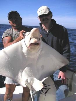 15/01 duckbill ray Cavalier & Blue Marlin Sport Fishing Gran Canaria