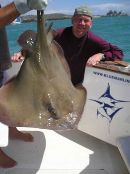 01/03 common stingray Cavalier & Blue Marlin Sport Fishing Gran Canaria