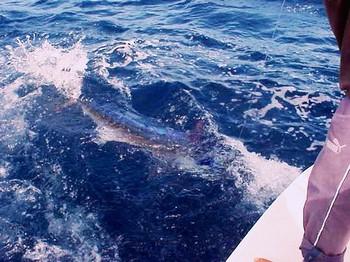 26/04 white marlin Cavalier & Blue Marlin Sport Fishing Gran Canaria