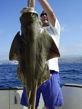 01/06 angel shark Cavalier & Blue Marlin Sport Fishing Gran Canaria