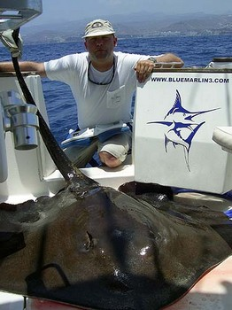 02/06 common stingray Cavalier & Blue Marlin Sport Fishing Gran Canaria