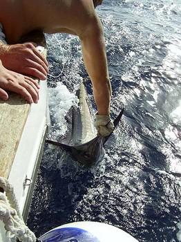 09/06 white marlin Cavalier & Blue Marlin Sport Fishing Gran Canaria