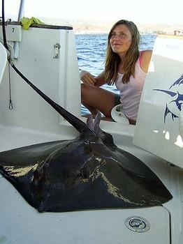 01/07 mantarraya común Pesca Deportiva Cavalier & Blue Marlin Gran Canaria