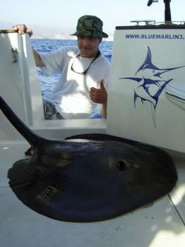 09/08 round stingray Cavalier & Blue Marlin Sport Fishing Gran Canaria