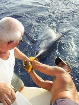 18/08 blue marlin Cavalier & Blue Marlin Sport Fishing Gran Canaria