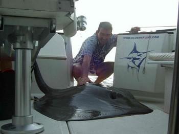 21/08 common stingray Cavalier & Blue Marlin Sport Fishing Gran Canaria