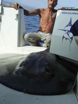 02/10 round stingray Cavalier & Blue Marlin Sport Fishing Gran Canaria