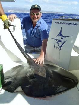 12/11 round stingray Cavalier & Blue Marlin Sport Fishing Gran Canaria
