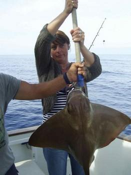 09/04 cownose ray Cavalier & Blue Marlin Sport Fishing Gran Canaria