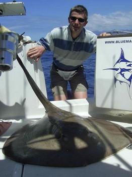 15/04 roughtail stingray Cavalier & Blue Marlin Sport Fishing Gran Canaria