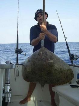 17/08 butterfly ray Cavalier & Blue Marlin Sport Fishing Gran Canaria