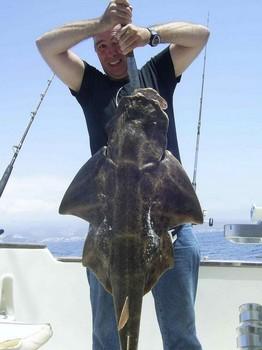18/08 angel shark Cavalier & Blue Marlin Sport Fishing Gran Canaria