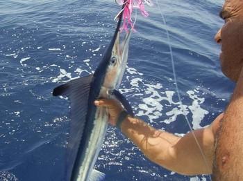 30/08 spearfish Cavalier & Blue Marlin Sport Fishing Gran Canaria