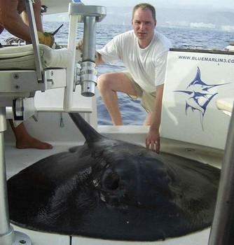02/09 round stingray Cavalier & Blue Marlin Sport Fishing Gran Canaria
