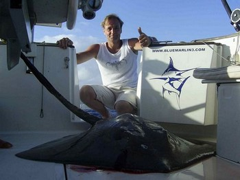 12/09 common stingray Cavalier & Blue Marlin Sport Fishing Gran Canaria