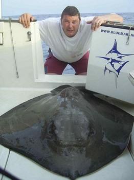 30/09 common stingray Cavalier & Blue Marlin Sport Fishing Gran Canaria