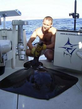12/10 common stingray Cavalier & Blue Marlin Sport Fishing Gran Canaria