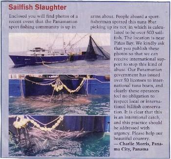 500 sailfish Cavalier & Blue Marlin Sport Fishing Gran Canaria