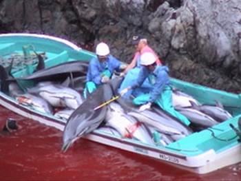 dolphin killers Cavalier & Blue Marlin Sport Fishing Gran Canaria