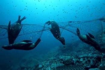 sea lions Cavalier & Blue Marlin Sport Fishing Gran Canaria