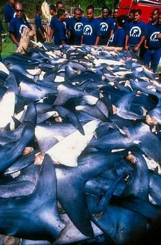 Japonese killers Cavalier & Blue Marlin Sport Fishing Gran Canaria