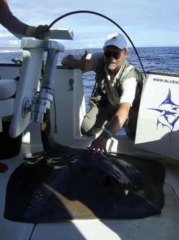 20/10 common stingray Cavalier & Blue Marlin Sport Fishing Gran Canaria