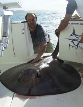 25/10 round stingray Cavalier & Blue Marlin Sport Fishing Gran Canaria