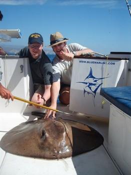 05/03 round stingray Cavalier & Blue Marlin Sport Fishing Gran Canaria