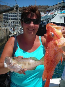 comber - dentex Cavalier & Blue Marlin Sport Fishing Gran Canaria
