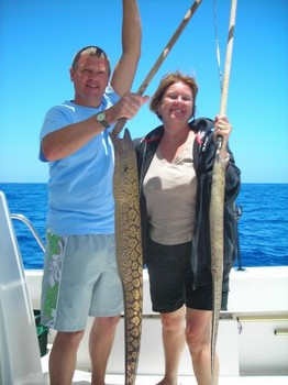 tiger moray Cavalier & Blue Marlin Sport Fishing Gran Canaria