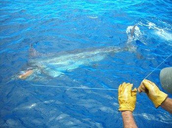 10/06 blue marlin Cavalier & Blue Marlin Sport Fishing Gran Canaria