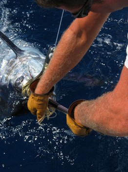 02/07 blue marlin Cavalier & Blue Marlin Sport Fishing Gran Canaria