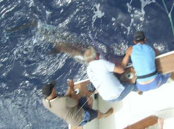 17/07 blue marlin Cavalier & Blue Marlin Sport Fishing Gran Canaria