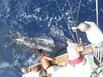 18/07 blue marlin Cavalier & Blue Marlin Sport Fishing Gran Canaria