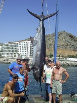 14/08 blue marlin Cavalier & Blue Marlin Sport Fishing Gran Canaria