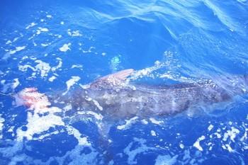 17/08 blue marlin Cavalier & Blue Marlin Sport Fishing Gran Canaria