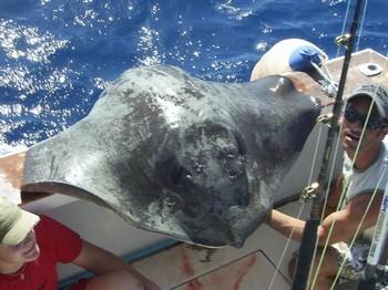 22/10 mantarraya común Pesca Deportiva Cavalier & Blue Marlin Gran Canaria