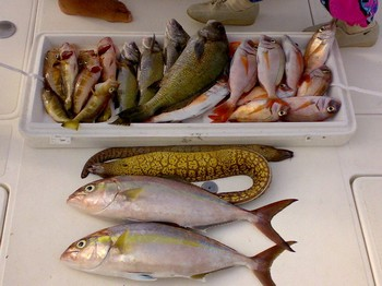 super catch Cavalier & Blue Marlin Sport Fishing Gran Canaria