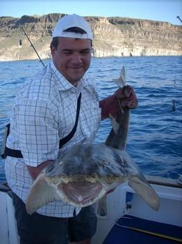 30/01 angelshark Cavalier & Blue Marlin Sport Fishing Gran Canaria