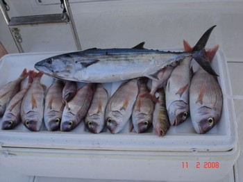 red snappers & bonito Cavalier & Blue Marlin Sport Fishing Gran Canaria