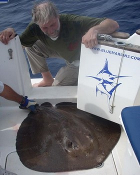 06/03 roughtail stingray Cavalier & Blue Marlin Sport Fishing Gran Canaria