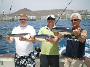 skipjack tuna - barracuda Cavalier & Blue Marlin Sport Fishing Gran Canaria
