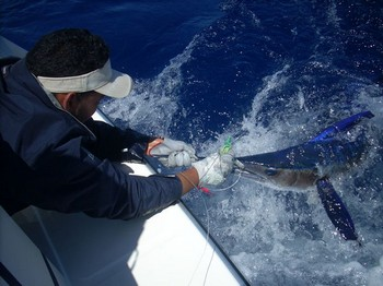 25/05 spearfish Cavalier & Blue Marlin Sport Fishing Gran Canaria