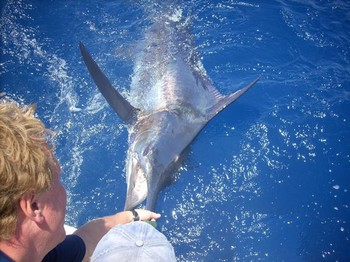 30/05 blue marlin Cavalier & Blue Marlin Sport Fishing Gran Canaria