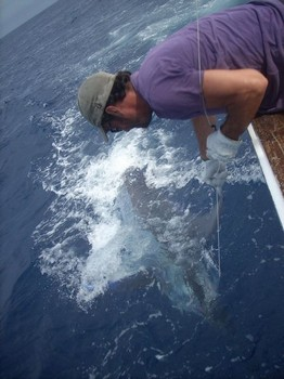 07/07 blue marlin Cavalier & Blue Marlin Sport Fishing Gran Canaria