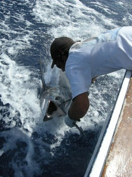 08/07 blue marlin Cavalier & Blue Marlin Sport Fishing Gran Canaria